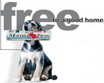 Free_to_a_good_home_1